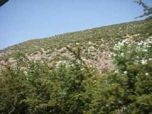 Le colline.